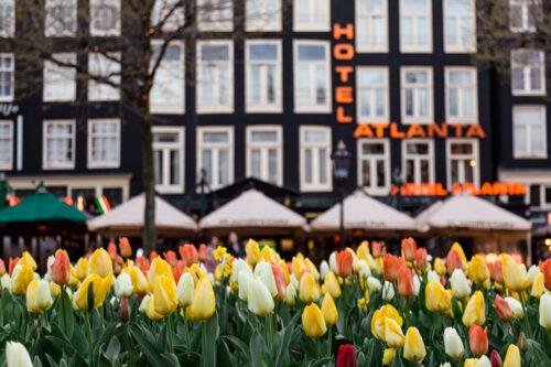 Hotel Atlanta and spring Amsterdam tulips in Rembrandt Square