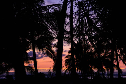 Silhouette of palm trees at sunset on hiking trail on Hawaii Big Island
